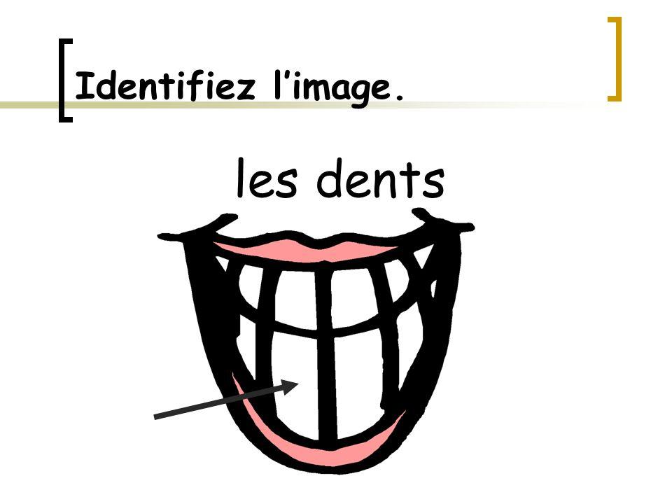 Identifiez l'image. les dents