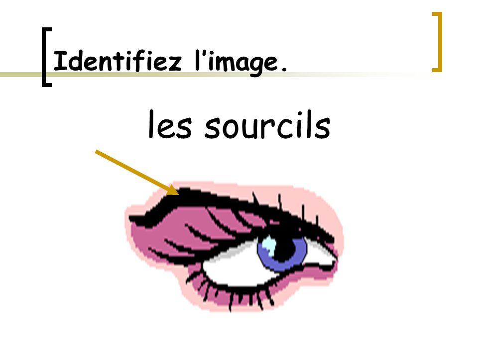 Identifiez l'image. les sourcils