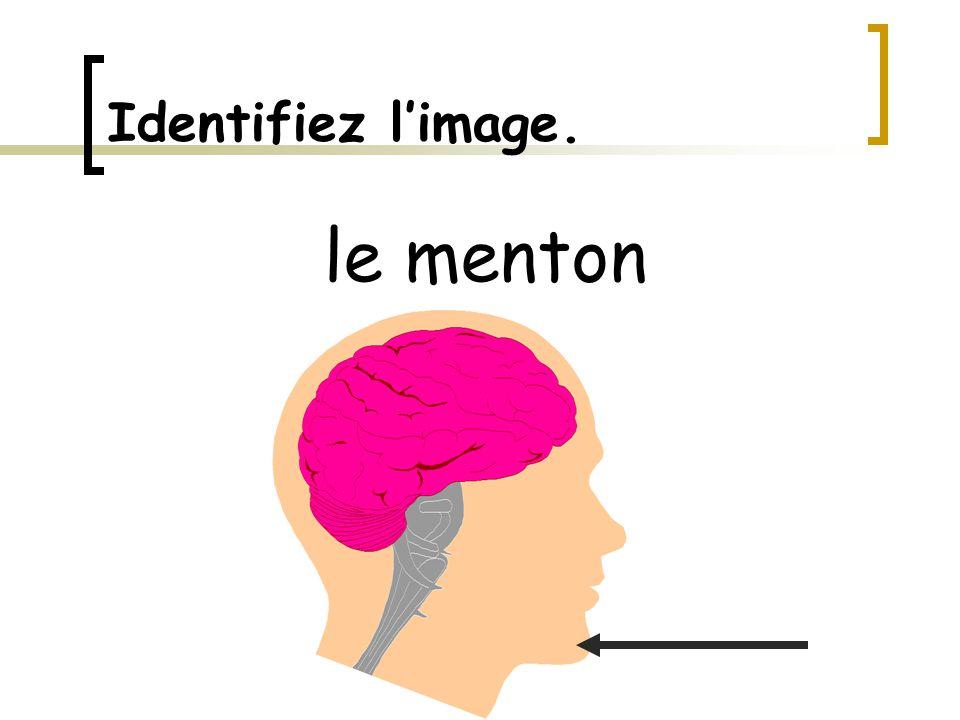 Identifiez l'image. le menton
