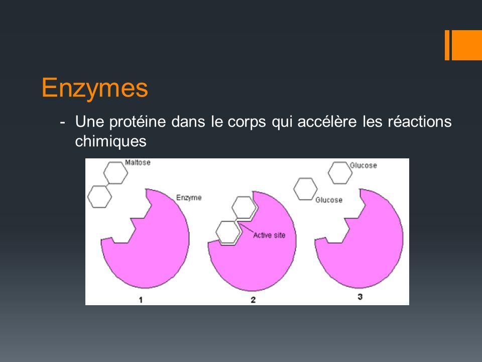 Enzymes -Une protéine dans le corps qui accélère les réactions chimiques