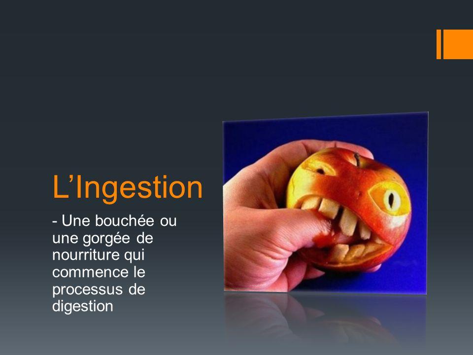 L'Ingestion - Une bouchée ou une gorgée de nourriture qui commence le processus de digestion