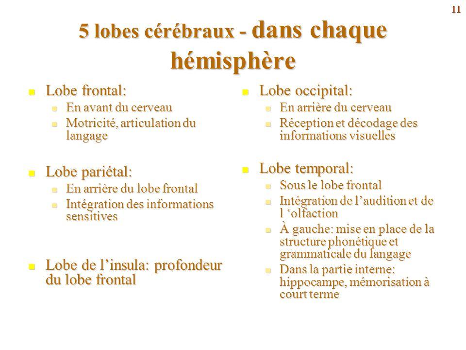 11 5 lobes cérébraux - dans chaque hémisphère Lobe frontal: Lobe frontal: En avant du cerveau En avant du cerveau Motricité, articulation du langage M