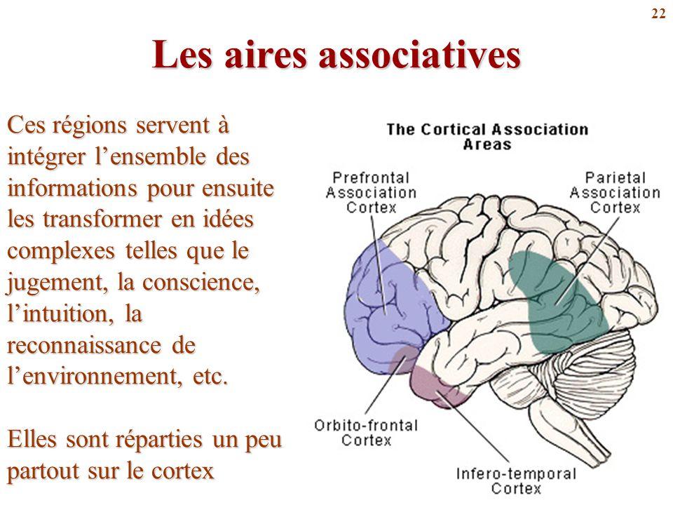 22 Les aires associatives Ces régions servent à intégrer l'ensemble des informations pour ensuite les transformer en idées complexes telles que le jug