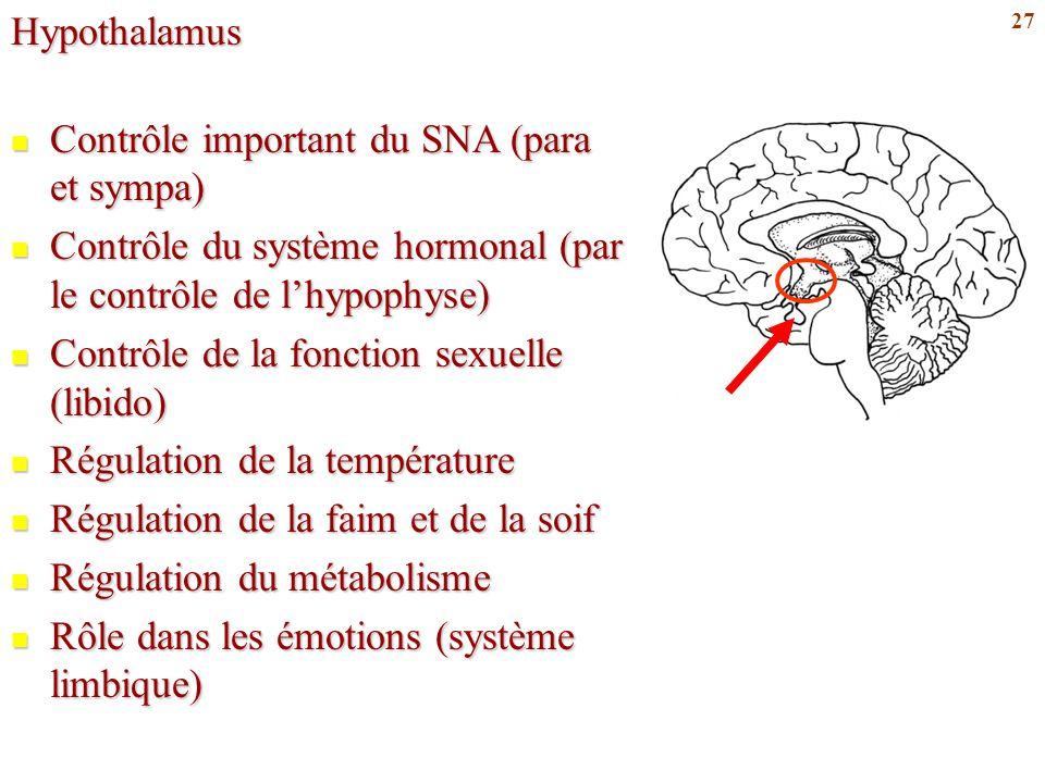 27Hypothalamus Contrôle important du SNA (para et sympa) Contrôle important du SNA (para et sympa) Contrôle du système hormonal (par le contrôle de l'