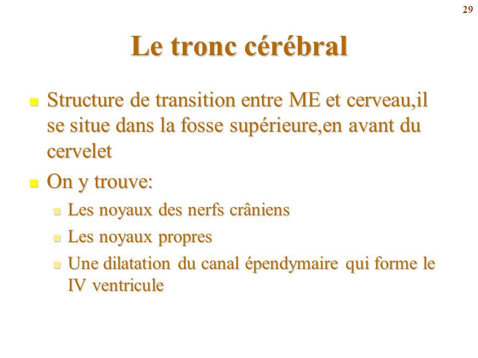 29 Le tronc cérébral Structure de transition entre ME et cerveau,il se situe dans la fosse supérieure,en avant du cervelet Structure de transition ent