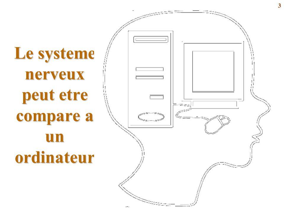 3 Le systeme nerveux peut etre compare a un ordinateur