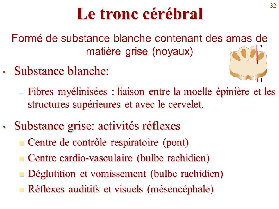 32 Le tronc cérébral Substance blanche: Substance blanche: – Fibres myélinisées : liaison entre la moelle épinière et les structures supérieures et av