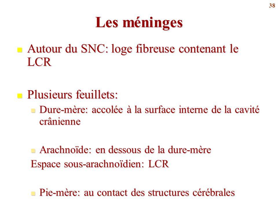 38 Les méninges Autour du SNC: loge fibreuse contenant le LCR Autour du SNC: loge fibreuse contenant le LCR Plusieurs feuillets: Plusieurs feuillets: