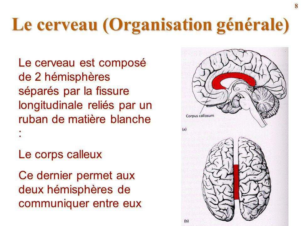 8 Le cerveau est composé de 2 hémisphères séparés par la fissure longitudinale reliés par un ruban de matière blanche : Le corps calleux Ce dernier pe