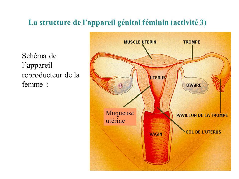 La structure de l appareil génital féminin (activité 3) Schéma de l'appareil reproducteur de la femme : Muqueuse utérine