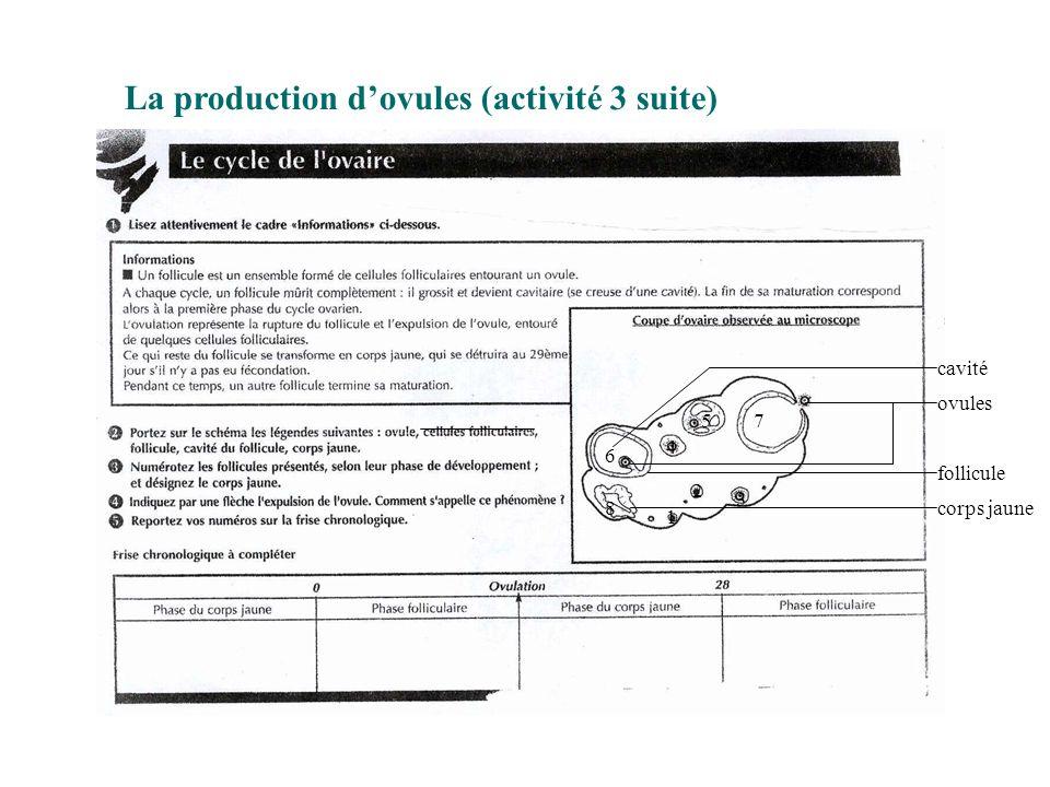 La production d'ovules (activité 3 suite) cavité ovules follicule corps jaune 1 2 3 4 5 6 7 8
