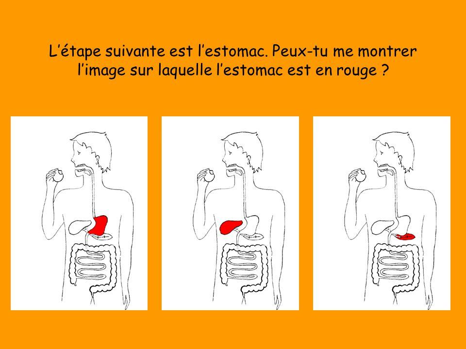L'étape suivante est l'estomac. Peux-tu me montrer l'image sur laquelle l'estomac est en rouge ?