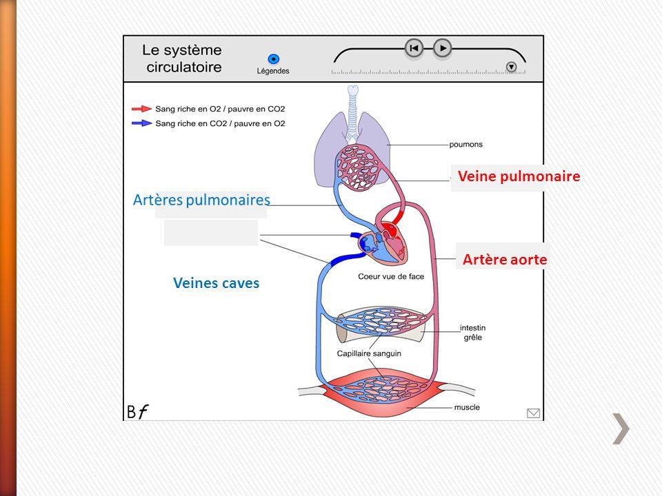 Veines caves Veine pulmonaire Artère aorte