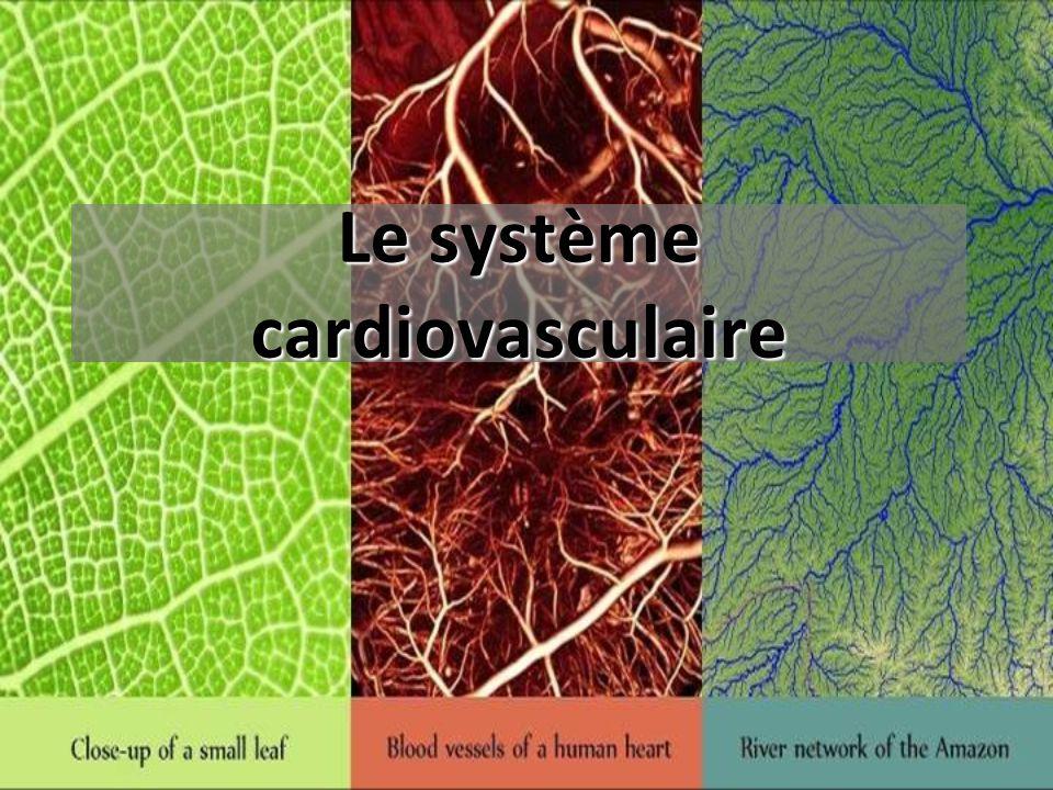 Séparation des cavités cardiaques Septums : cloisons immobiles Valves : cloisons mobiles