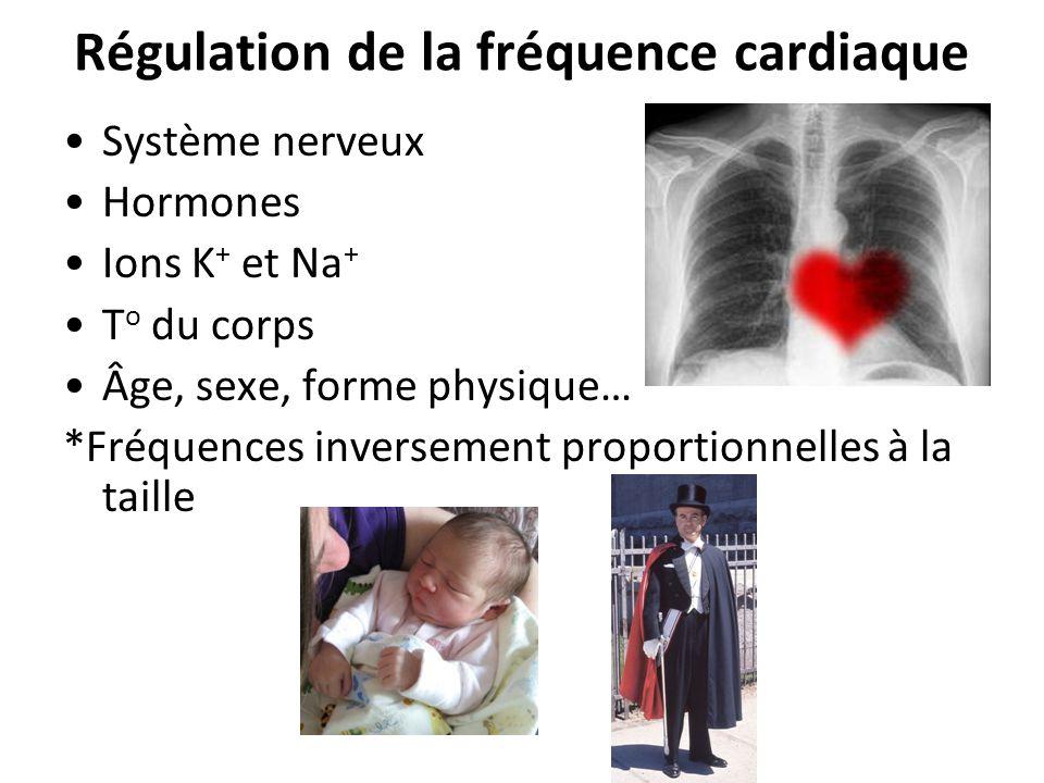Régulation de la fréquence cardiaque Système nerveux Hormones Ions K + et Na + T o du corps Âge, sexe, forme physique… *Fréquences inversement proportionnelles à la taille