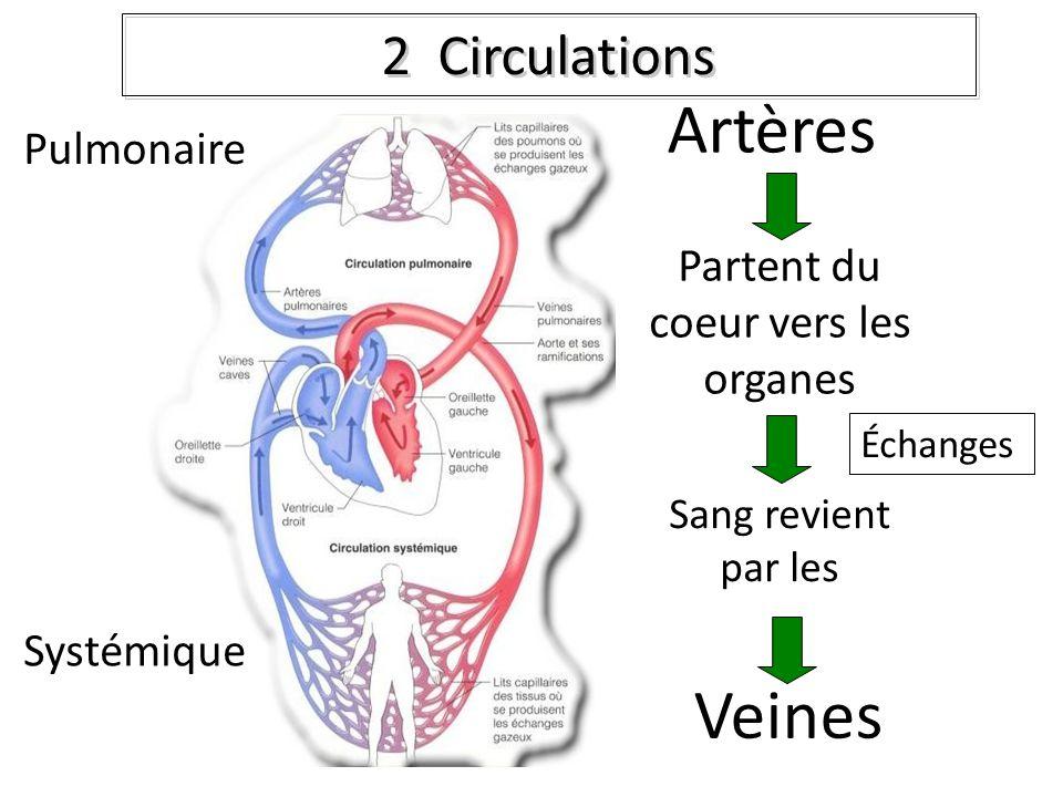 2 Circulations Veines Partent du coeur vers les organes Artères Sang revient par les Pulmonaire Systémique Échanges