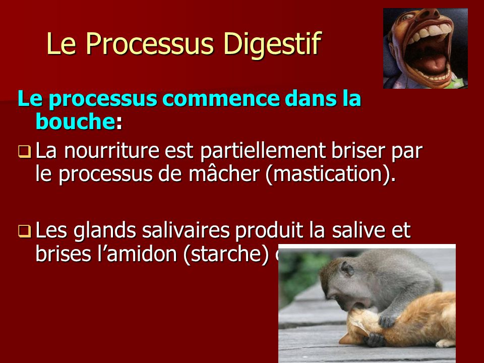 Le Processus Digestif Le processus commence dans la bouche:  La nourriture est partiellement briser par le processus de mâcher (mastication).