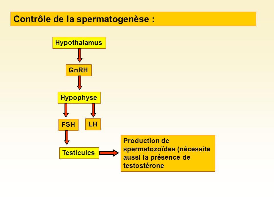 Élaboration et survie des spermatozoïdes nécessite une température ~ 3 ºC < température du corps.
