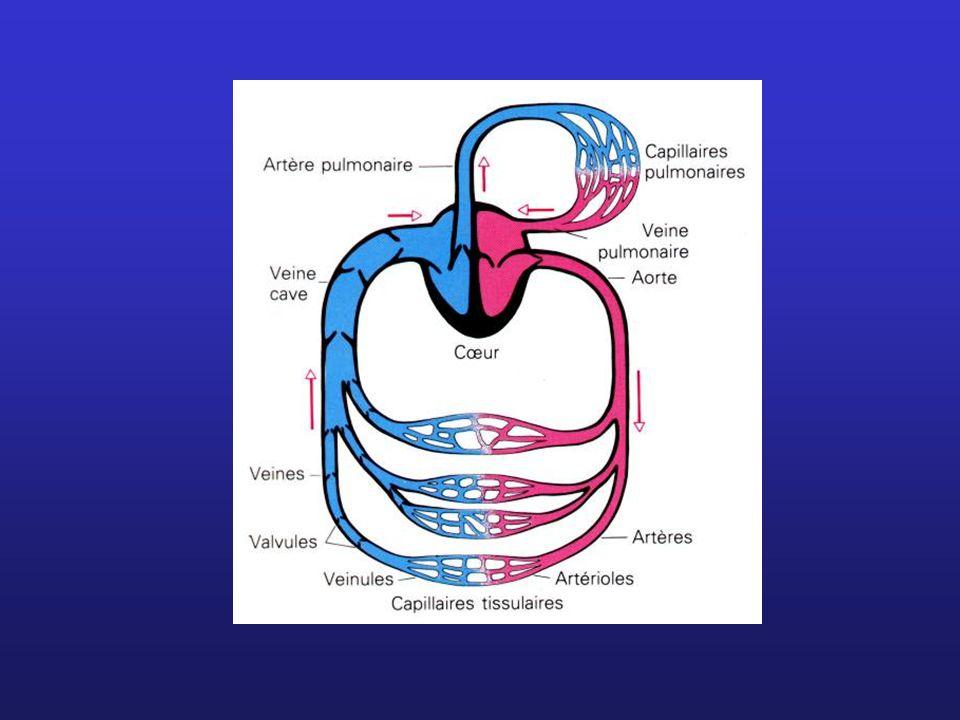 Circulation pulmonaire Circulation systémique