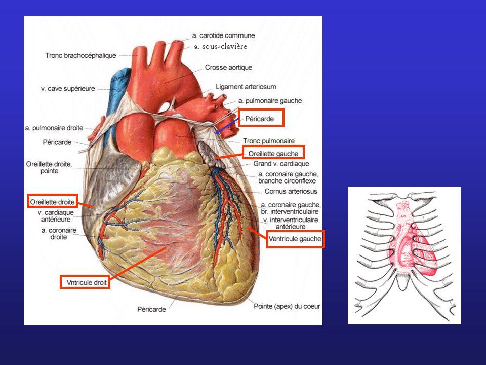 aorte oreillette G ventricule G Artère pulmonaire Phénomènes au cours d'une révolution cardiaque O ouverture F fermeture Ao sigmoïdes Aortiques M mitrales P sigmoïdes pulmonaires T tricuspides Fréquence cardiaque .