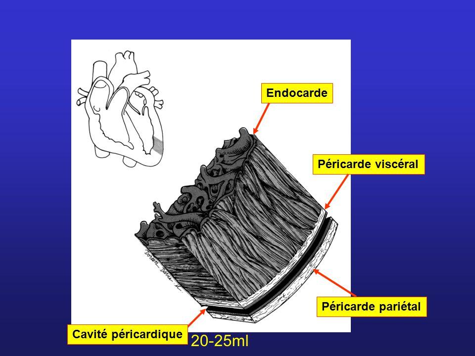 EndocardePéricarde viscéral Péricarde pariétal Cavité péricardique 20-25ml