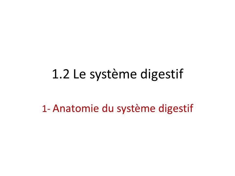 1.2 Le système digestif 1- Anatomie du système digestif