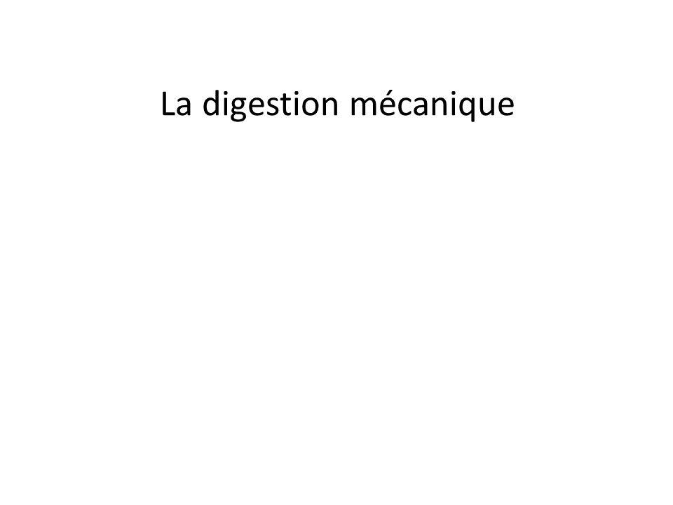 La digestion mécanique