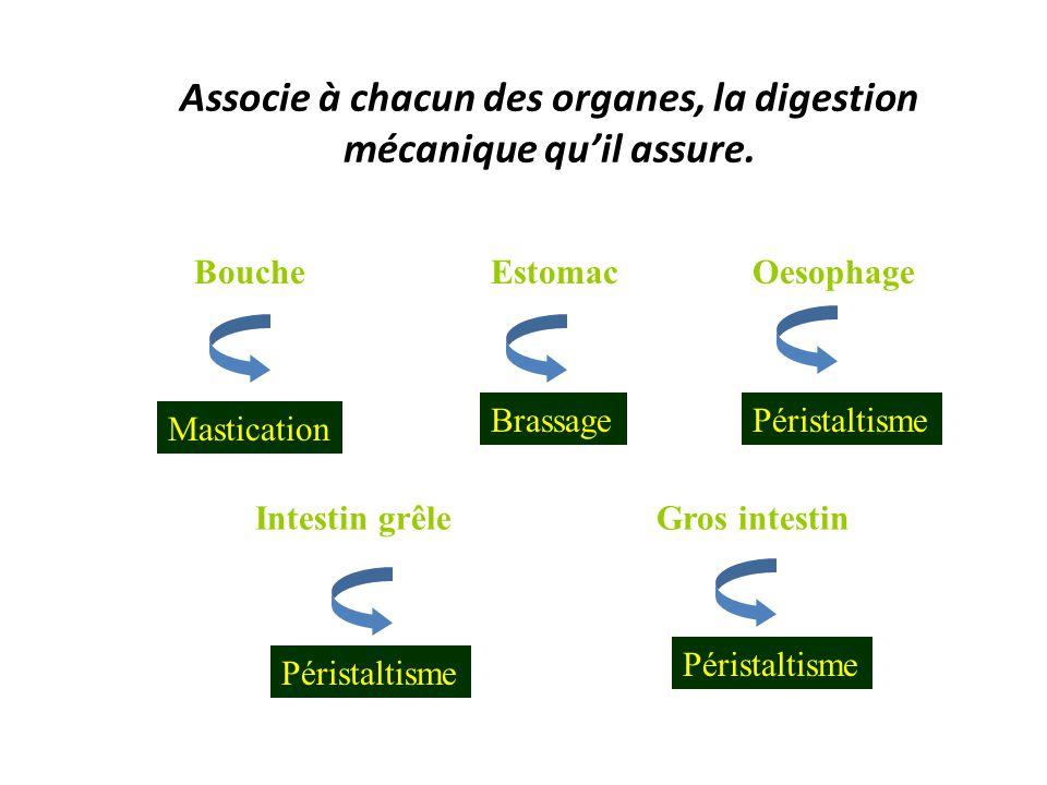 Associe à chacun des organes, la digestion mécanique qu'il assure.