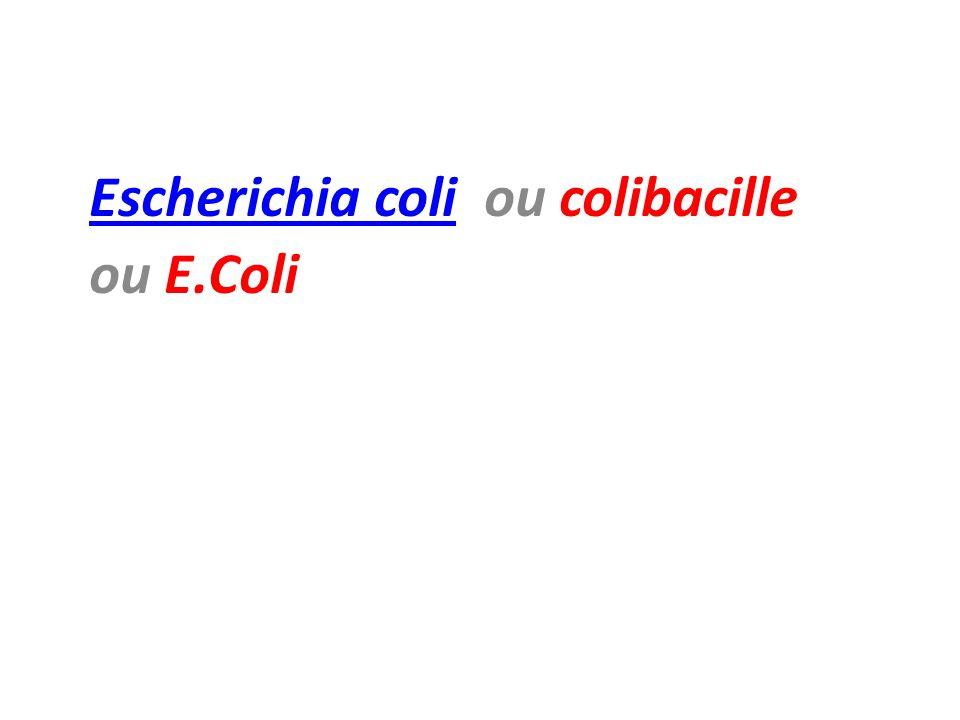 Escherichia coliEscherichia coli ou colibacille ou E.Coli