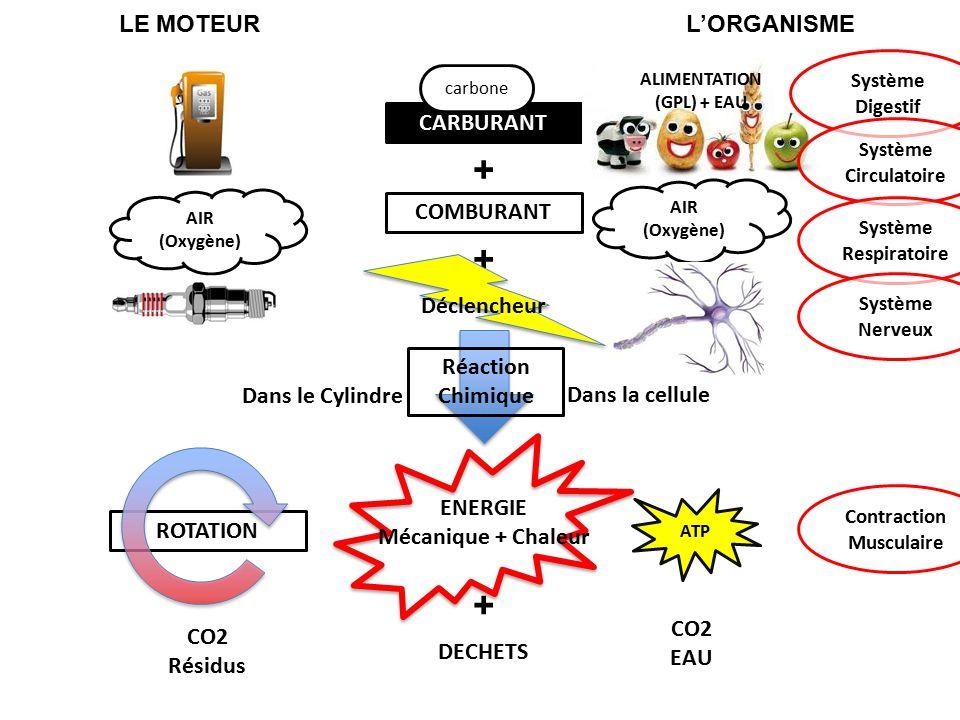 + LE MOTEURL'ORGANISME + COMBURANT Déclencheur ENERGIE Mécanique + Chaleur + DECHETS CARBURANT carbone AIR (Oxygène) ROTATION CO2 Résidus ALIMENTATION