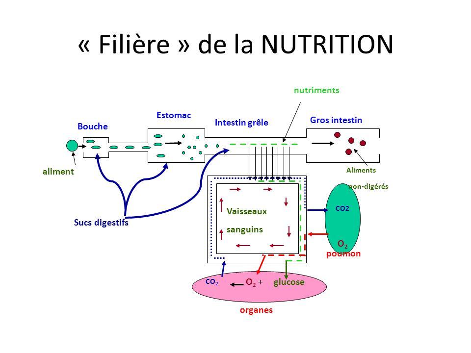 « Filière » de la NUTRITION Bouche Estomac Intestin grêle Gros intestin Sucs digestifs glucose CO2 O 2 O 2 + poumon Vaisseaux sanguins CO 2 nutriments