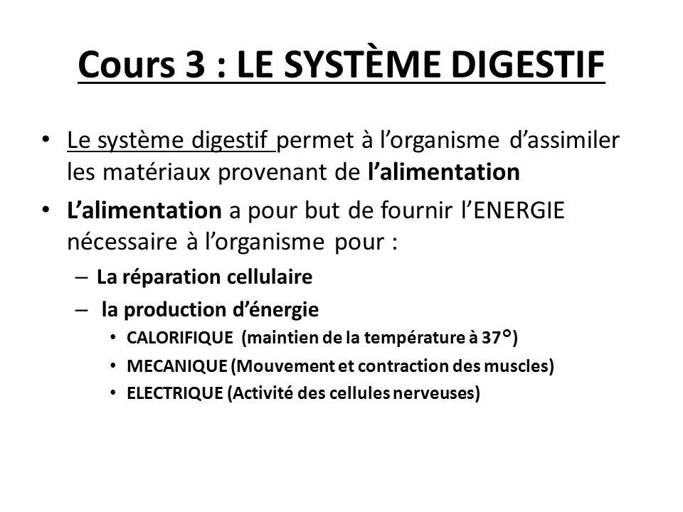 Cours 3 : LE SYSTÈME DIGESTIF Le système digestif permet à l'organisme d'assimiler les matériaux provenant de l'alimentation L'alimentation a pour but
