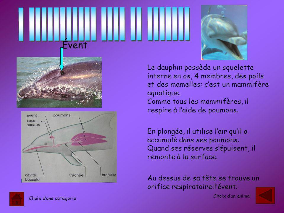 Choix d'une catégorie Choix d'un animal Le dauphin possède un squelette interne en os, 4 membres, des poils et des mamelles: c'est un mammifère aquatique.