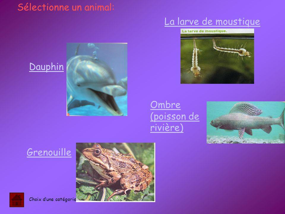 Dauphin Grenouille Ombre (poisson de rivière) Sélectionne un animal: Choix d'une catégorie La larve de moustique