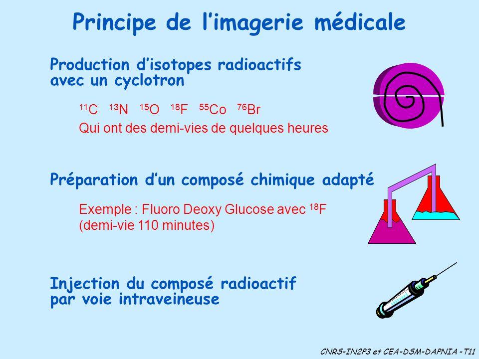 Principe de limagerie médicale 11 C 13 N 15 O 18 F 55 Co 76 Br Qui ont des demi-vies de quelques heures Production disotopes radioactifs avec un cyclotron Exemple : Fluoro Deoxy Glucose avec 18 F (demi-vie 110 minutes) Préparation dun composé chimique adapté Injection du composé radioactif par voie intraveineuse CNRS-IN2P3 et CEA-DSM-DAPNIA -T11