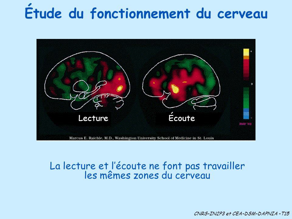 Étude du fonctionnement du cerveau LectureÉcoute La lecture et lécoute ne font pas travailler les mêmes zones du cerveau CNRS-IN2P3 et CEA-DSM-DAPNIA -T15