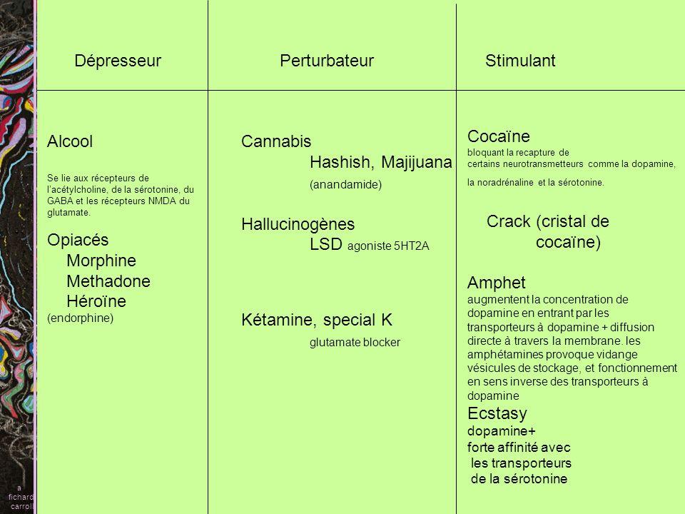 DépresseurPerturbateurStimulant Cannabis Hashish, Majijuana (anandamide) Hallucinogènes LSD agoniste 5HT2A Kétamine, special K glutamate blocker Alcoo