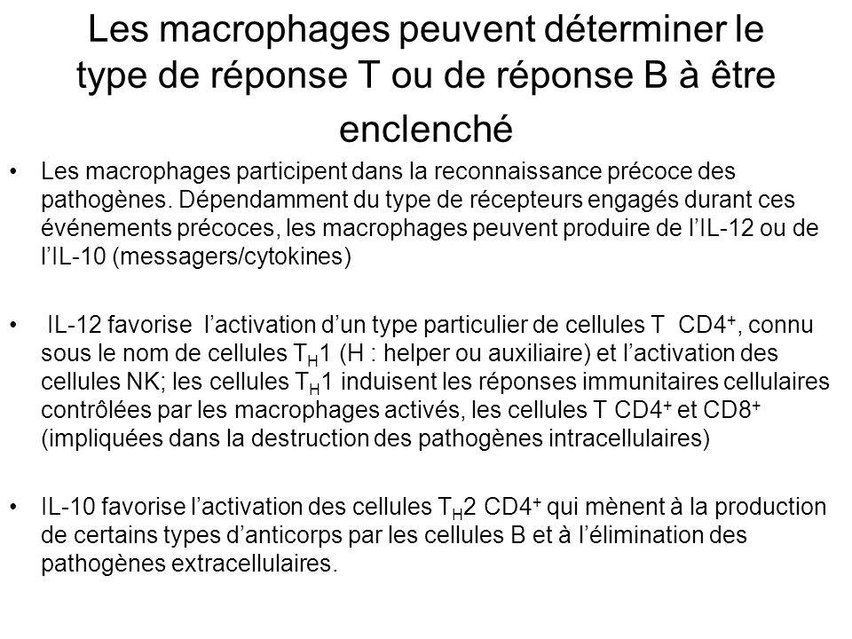 Les macrophages peuvent déterminer le type de réponse T ou de réponse B à être enclenché Les macrophages participent dans la reconnaissance précoce des pathogènes.