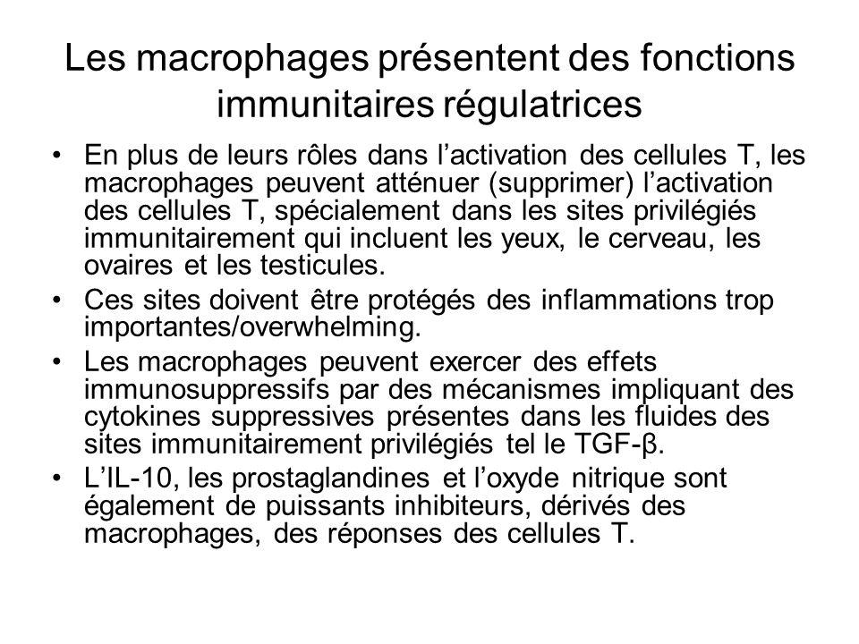 Les macrophages présentent des fonctions immunitaires régulatrices En plus de leurs rôles dans lactivation des cellules T, les macrophages peuvent atténuer (supprimer) lactivation des cellules T, spécialement dans les sites privilégiés immunitairement qui incluent les yeux, le cerveau, les ovaires et les testicules.