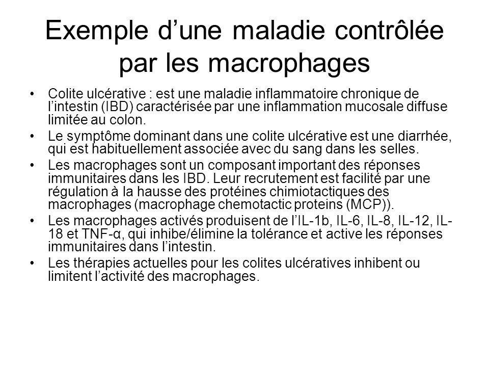 Exemple dune maladie contrôlée par les macrophages Colite ulcérative : est une maladie inflammatoire chronique de lintestin (IBD) caractérisée par une inflammation mucosale diffuse limitée au colon.