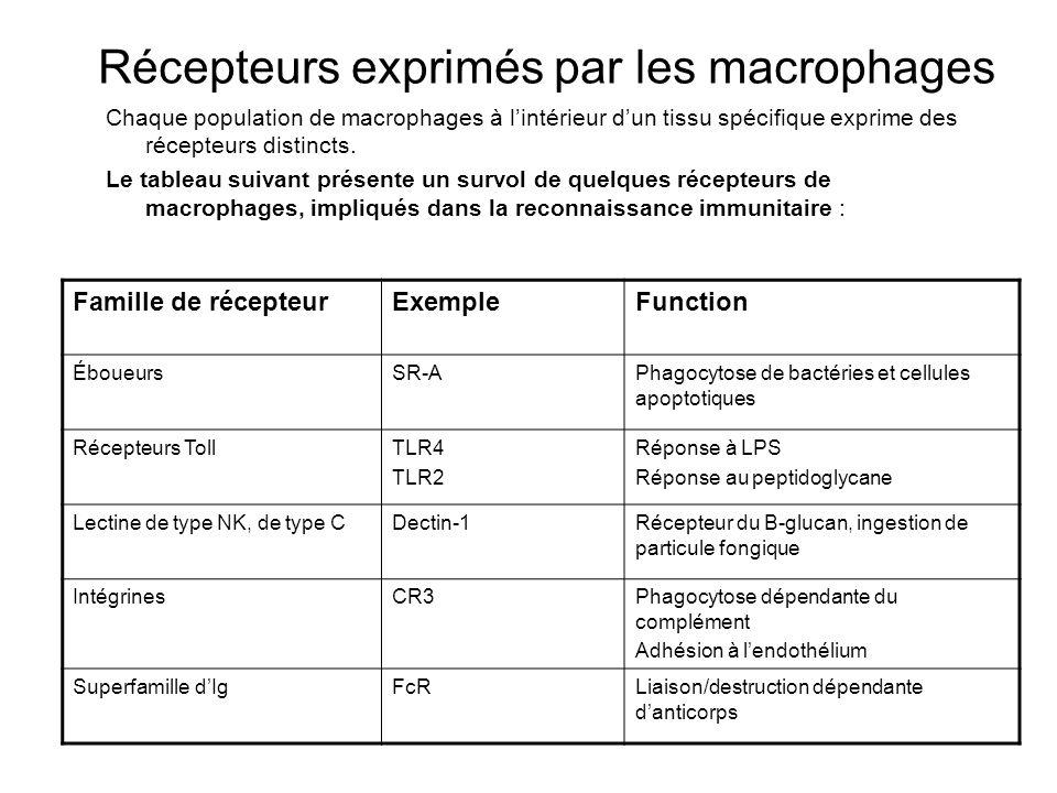 Récepteurs exprimés par les macrophages Chaque population de macrophages à lintérieur dun tissu spécifique exprime des récepteurs distincts.
