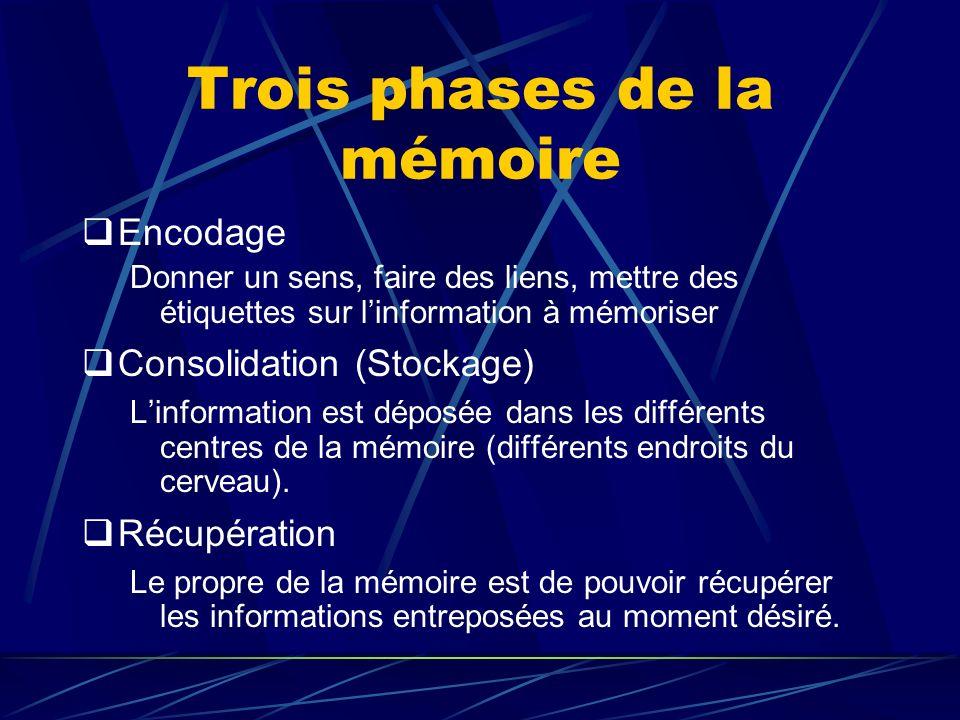 Trois phases de la mémoire Encodage Donner un sens, faire des liens, mettre des étiquettes sur linformation à mémoriser Consolidation (Stockage) Linformation est déposée dans les différents centres de la mémoire (différents endroits du cerveau).