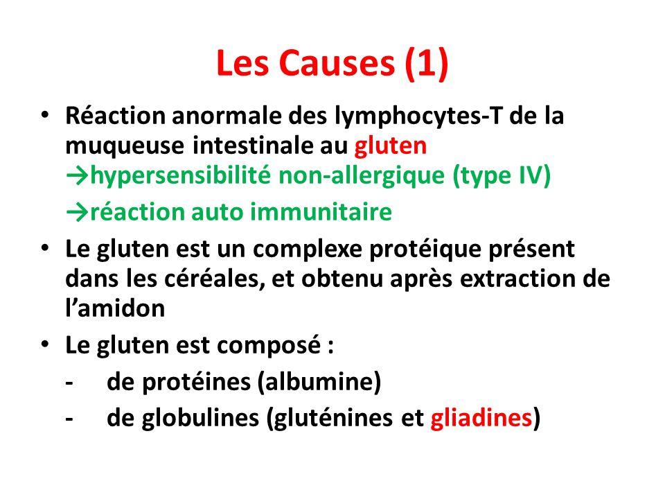 Les gliadines toxiques déclenchent au niveau des entérocytes, la sécrétion de zonuline aux propriétés pro-inflammatoires vasodilatatrices Dissociation des jonctions entre entérocytes augmentation de labsorption intestinale de gliadines, afflux au sein des muqueuses de cellules immunitaires sécrétrices de cytokines inflammatoires.