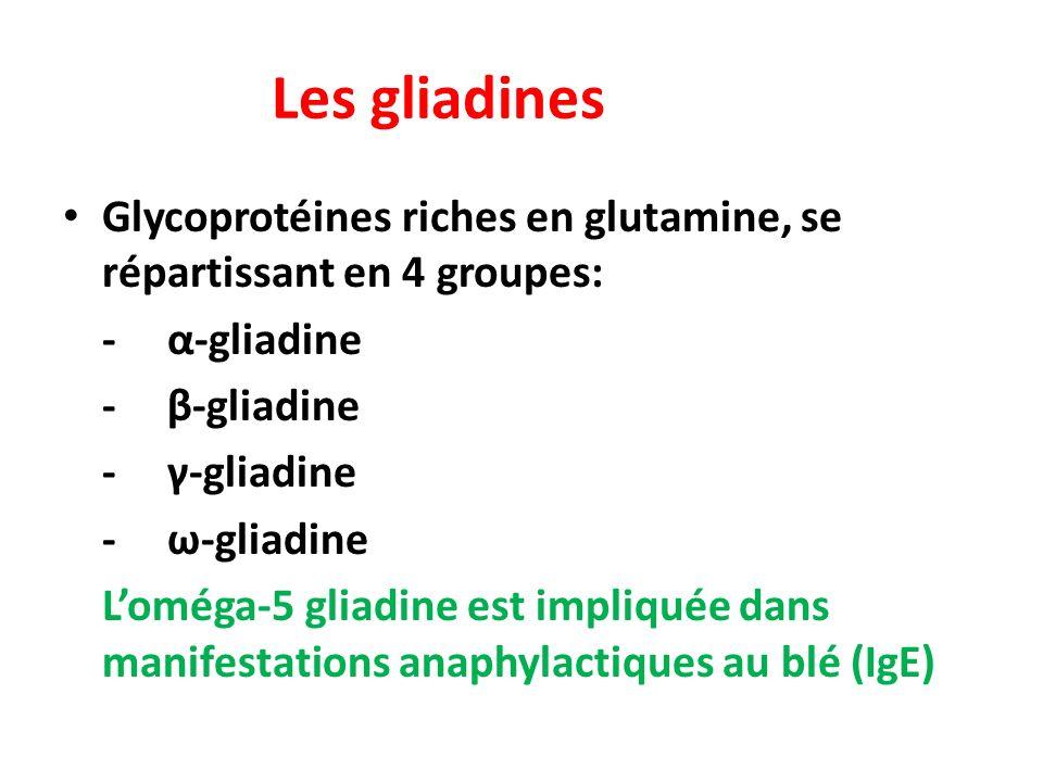 Les gliadines Glycoprotéines riches en glutamine, se répartissant en 4 groupes: -α-gliadine -β-gliadine -γ-gliadine -ω-gliadine Loméga-5 gliadine est impliquée dans manifestations anaphylactiques au blé (IgE)