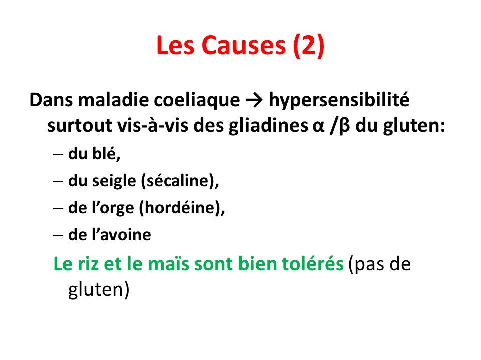 Les Causes (2) Dans maladie coeliaque hypersensibilité surtout vis-à-vis des gliadines α /β du gluten: – du blé, – du seigle (sécaline), – de lorge (hordéine), – de lavoine Le riz et le maïs sont bien tolérés (pas de gluten)