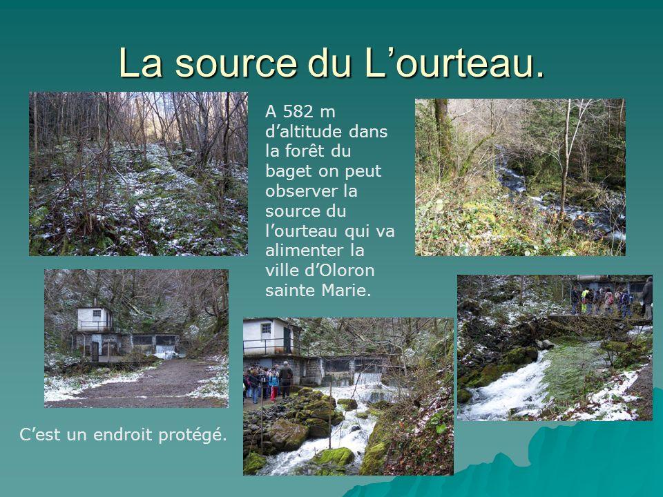 La source du Lourteau.