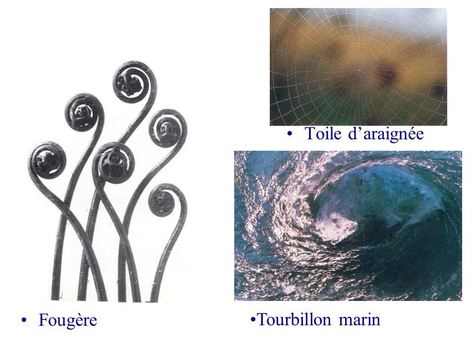 Toile daraignée Fougère Tourbillon marin