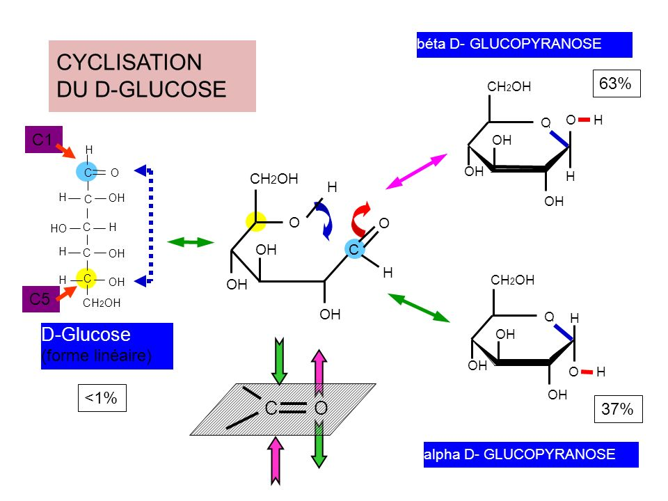D-Glucose (forme linéaire) CYCLISATION DU D-GLUCOSE alpha D- GLUCOPYRANOSE OH CH 2 OH O OH H CH 2 OH HO C O C C C C OH H H H H H C CH 2 OH OH O H O H