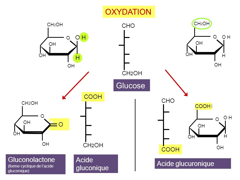 CH 2 OH COOH CH 2 OH Glucose Acide gluconique OXYDATION CHO COOH Acide glucuronique OH CH 2 OH O OH H CH 2 OH O OH O CH 2 OH O OH H CH 2 OH OH O COOH