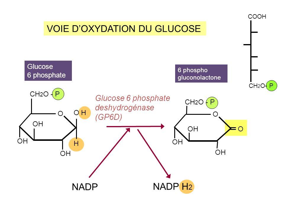 D-Fructose (forme linéaire) CYCLISATION DU D-FRUCTOSE alpha D- FRUCTOFURANOSE C CH 2 OH OH O CH 2 OH O H OH CH 2 OH O OH CH 2 OH O H béta D- FRUCTOFURANOSE CH 2 OH HO C O C C C C OH H H H H H CH 2 OH O OH CH 2 OH O H C5 C2